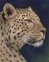 Persion Leopard Pastel Painting Preview
