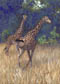 Pair of Giraffes Pastel